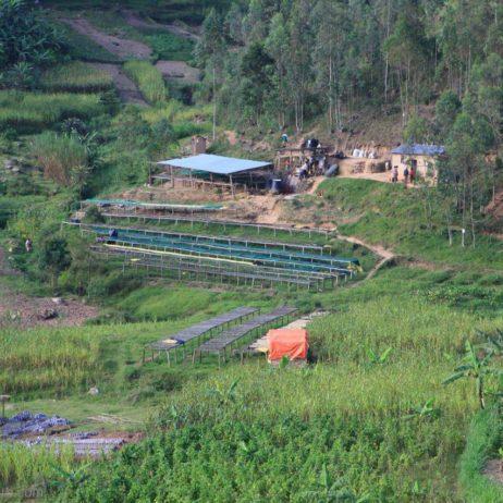 dodd-coffee-rwanda-rulindo