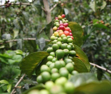 doddd-coffee-colombia-valle-de-los-puentes